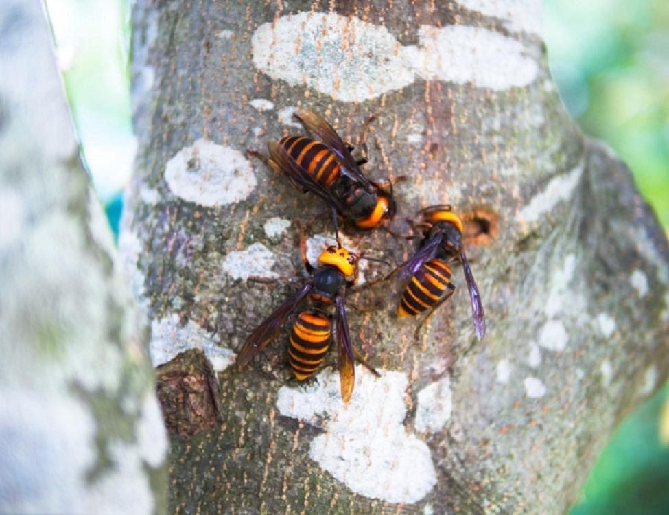 蜂の巣駆除出張救Q隊.24【船井郡 京丹波町エリア】のアピールポイント3