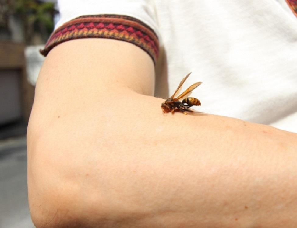 蜂の巣駆除出張救急車【千代田区エリア】のアピールポイント3