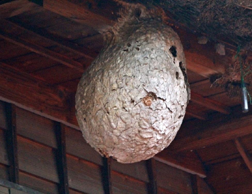 蜂の巣トラブル救Q隊.24【板野郡 上板町エリア】のアピールポイント1